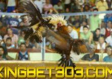 AGEN S128 LIVE