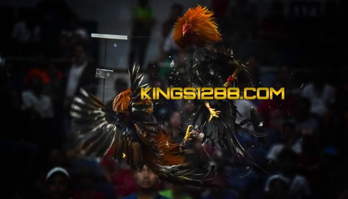 Adu Ayam S128